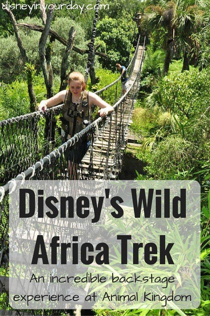 Disney's Wild Africa Trek - Disney in your Day